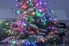 Christmas Tree Long Beach WA